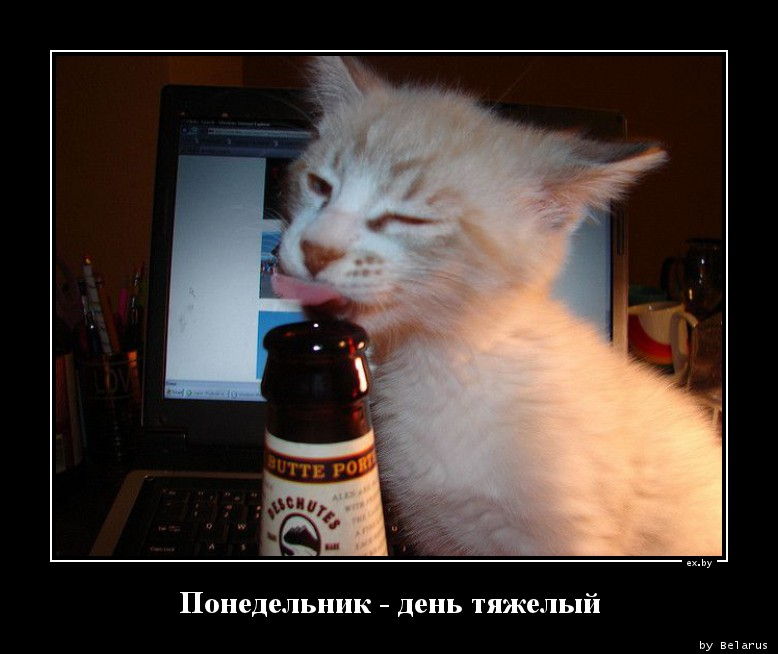 Понедельник день тяжелый картинки смешные с кошками