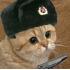кот великолепный